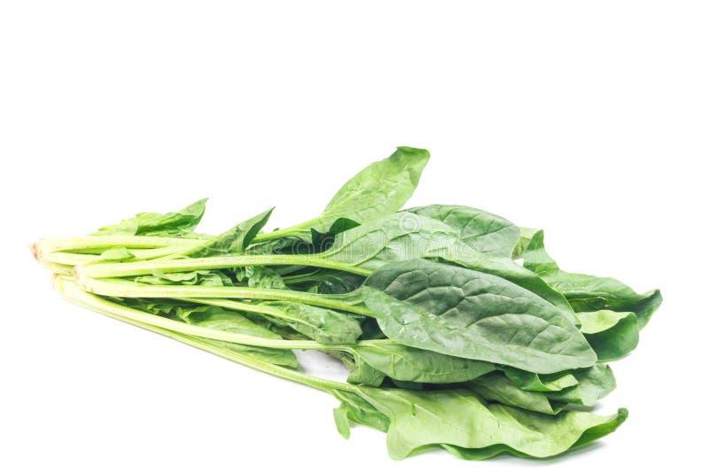 свежий шпинат листьев стоковая фотография