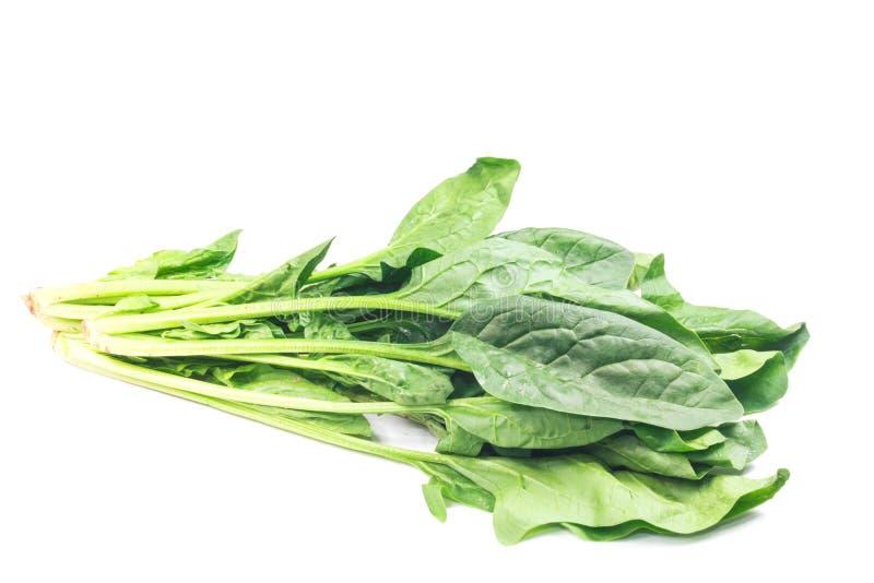 свежий шпинат листьев стоковые изображения