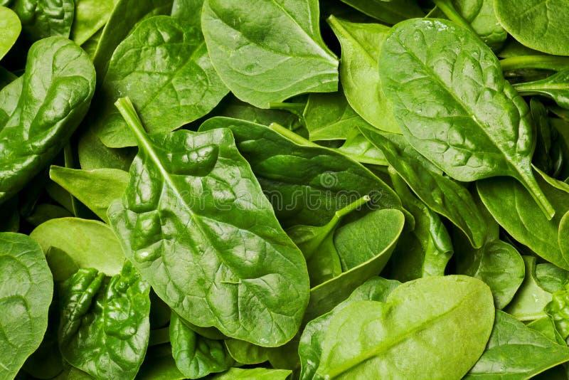 свежий шпинат стоковое изображение rf