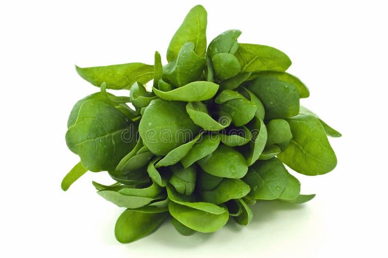 свежий шпинат стоковое фото