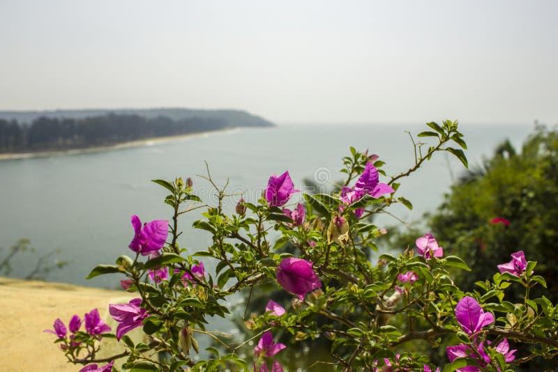 Свежий яркий розовый тропический конец-вверх цветков на ветви с зелеными листьями на запачканной предпосылке берега голубого океа стоковые изображения rf