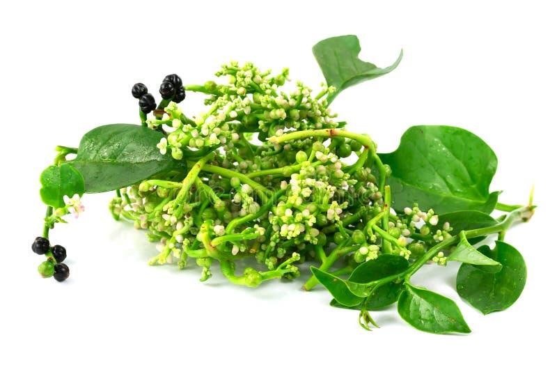 Свежий malabar шпинат или шпинат Цейлона или Basellaceae стоковая фотография