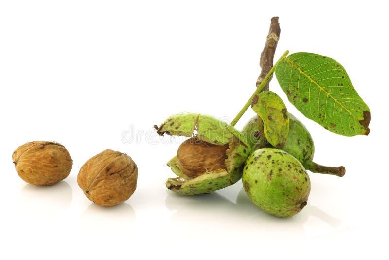 свежим раскрытые juglans грецкие орехи раковины regia стоковые фото