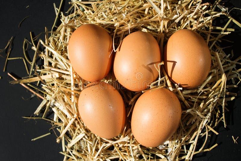 5 свежих сырцовых яя с веснушками на сене на черной предпосылке стоковые изображения rf