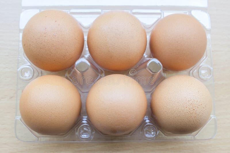 6 свежих яичек в коробке стоковая фотография