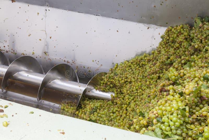 Свежо сжатые виноградины hanepoot идя через прессу виноградины стоковое изображение rf