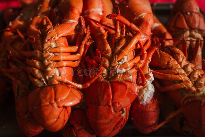 Свежо уловленный сваренный омар стоковая фотография rf