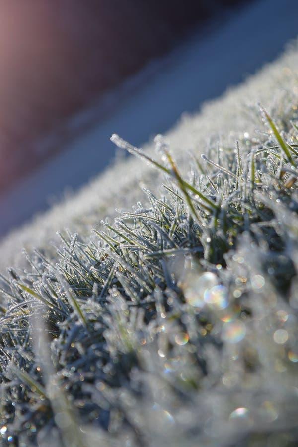 Сверкная зима стоковое изображение