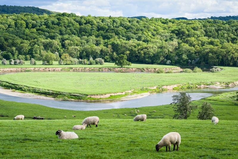 Свертывая английская сельская местность сельского хозяйства стоковое изображение