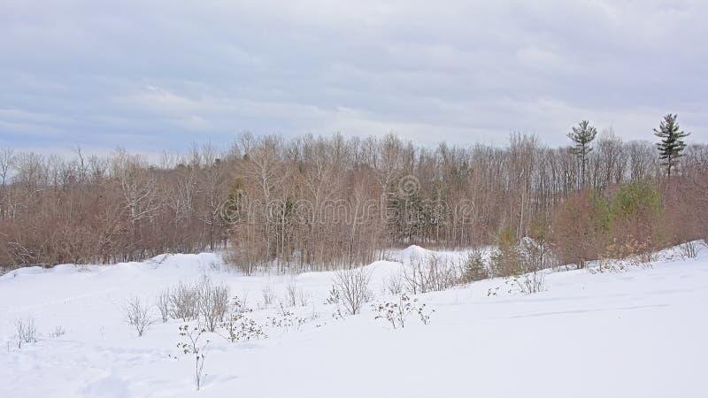 Свертывая фланк холма предусматриванный в снеге с обнаженным и хвойными деревьями и кустарниками стоковая фотография rf