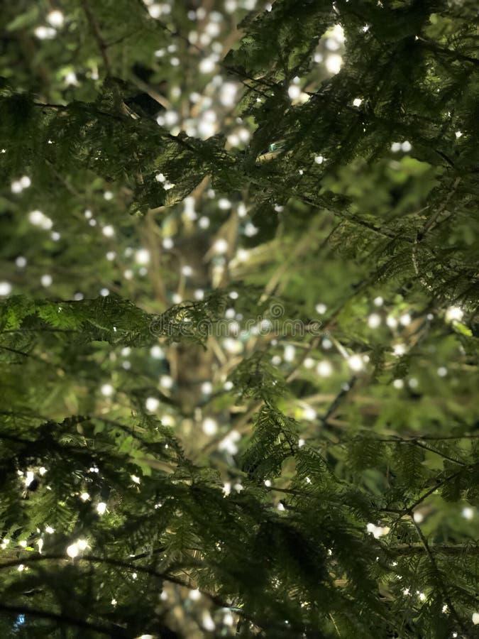 Света в дереве стоковые фотографии rf