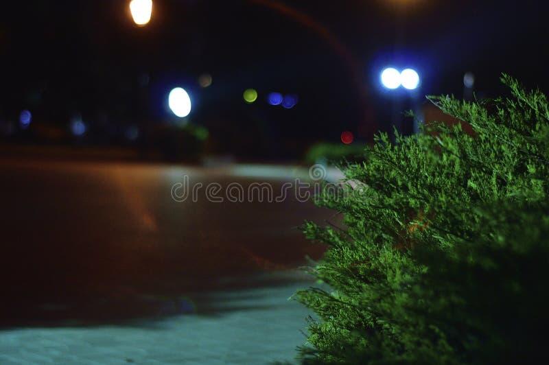 Света города ночи в парке стоковое фото rf