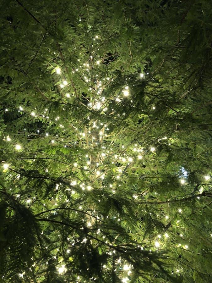 Света на дереве стоковая фотография rf