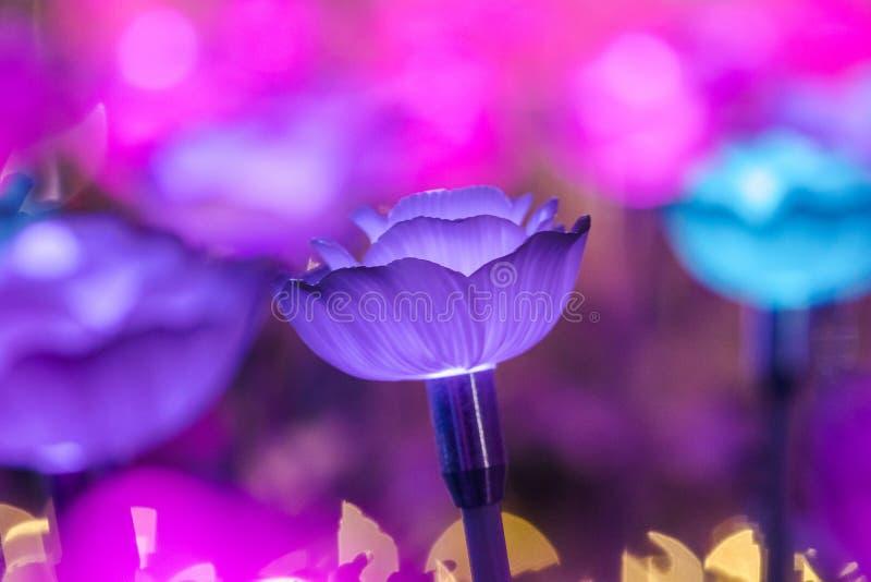 Света украшены как цветки для создания красивого света стоковая фотография
