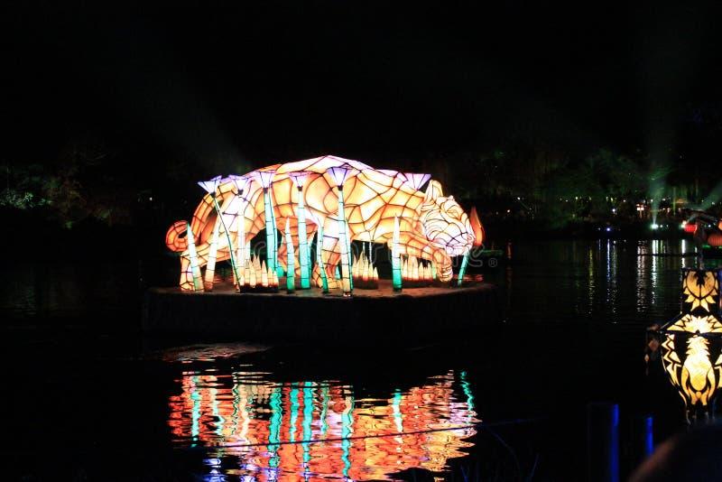 Светлая выставка на животном мире стоковое изображение