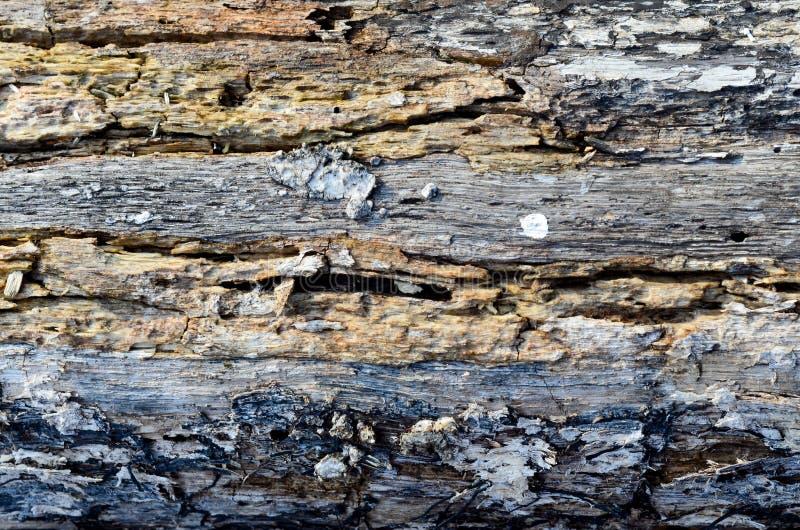 Светлая текстура коры дерева в горизонтальном плане стоковое изображение
