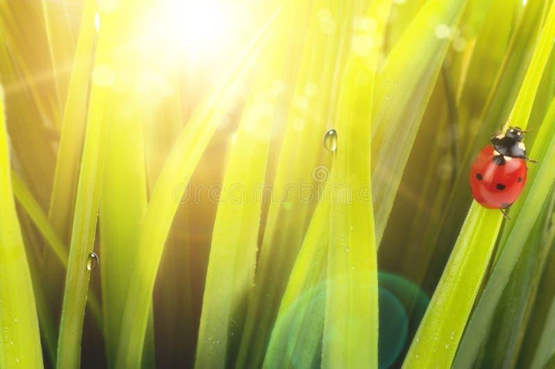 светлое утро стоковое изображение