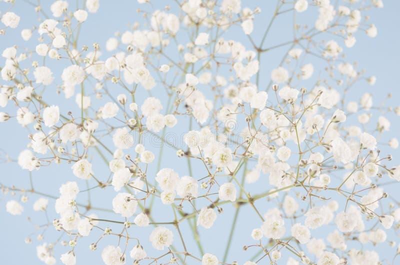 Светлые мягкие элегантные небольшие воздушные цветки на пастельной голубой предпосылке цвета стоковая фотография