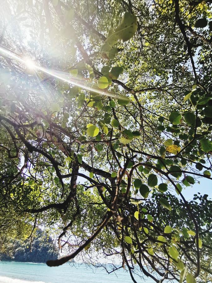 Светлый приходить через деревья стоковое фото rf