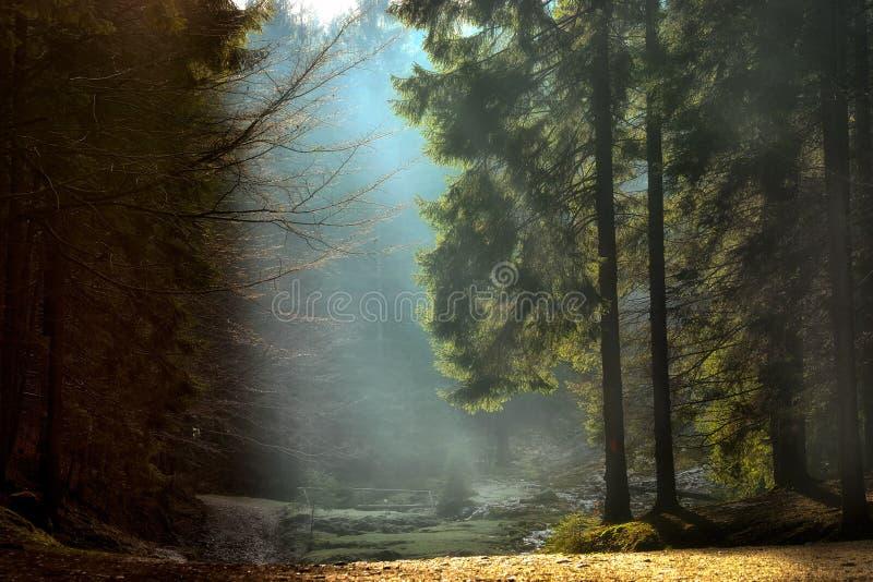 Световые лучи через деревья ландшафт осени последний стоковые фотографии rf