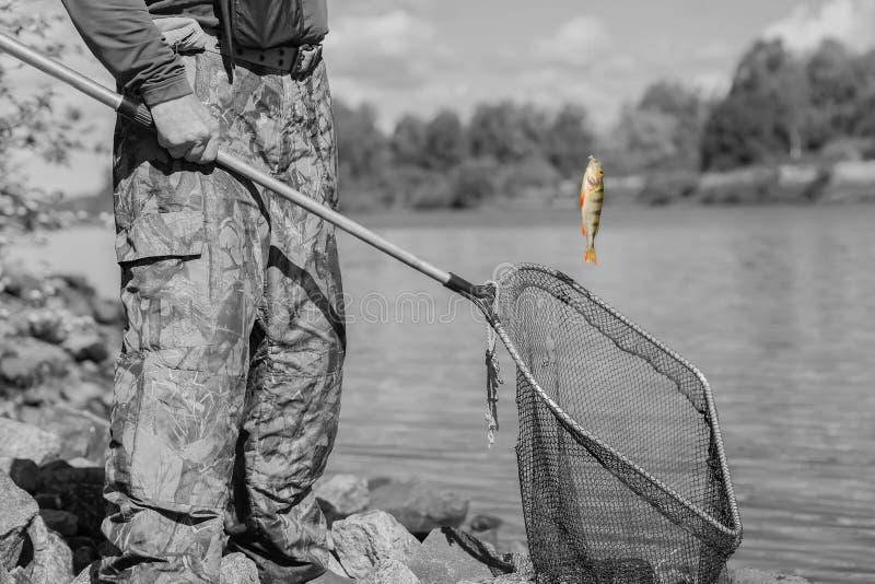 Светотеневой тонизированный естественный пруд Рыбная ловля трофея Малая рыбка на удя линии, старой сети рыб с отверстиями Концепц стоковая фотография rf