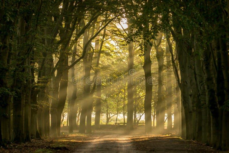 светя валы солнца стоковая фотография