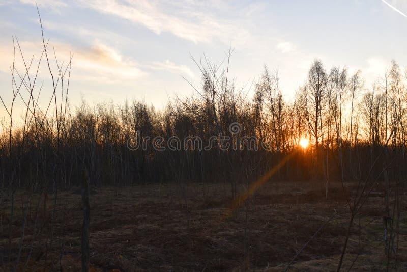Светя солнце за деревьями стоковое изображение rf
