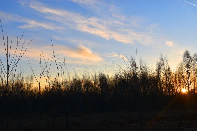 Светя солнце за деревьями стоковое фото