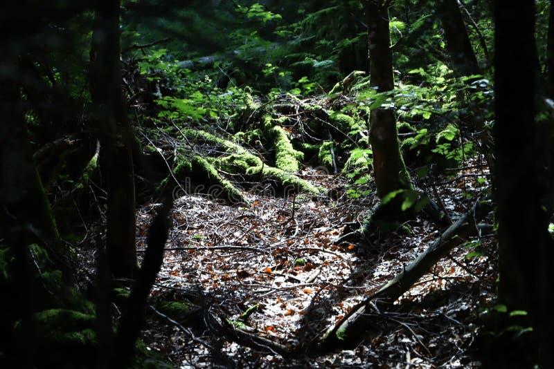 Свет в древесине стоковое фото rf