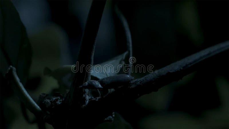 Свет грибков привлекает жука щелчка стоковые фото