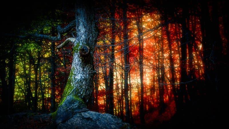 Свет леса стоковое фото