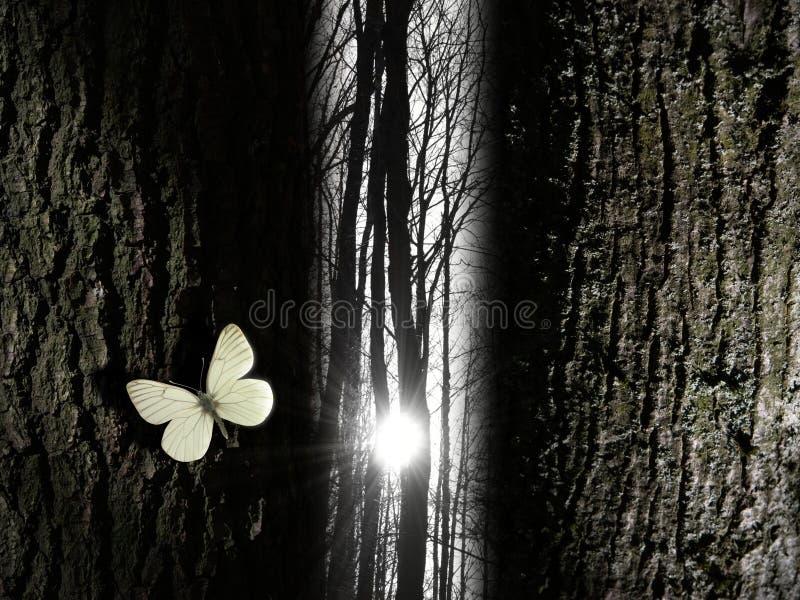 свет зазора бабочки около духовного вала стоковое фото rf
