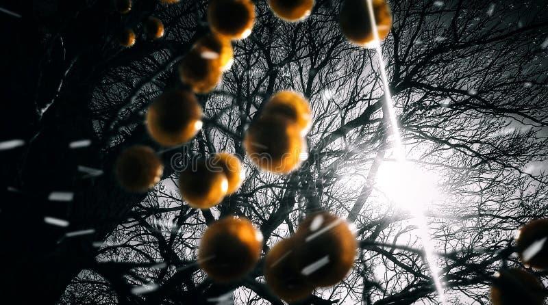 Свет за деревом стоковые изображения rf