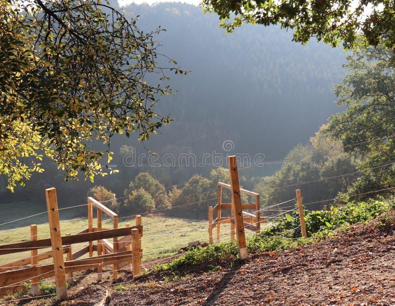 Свет и деревья утра с деревянной загородкой на ферме в холмах стоковые изображения rf