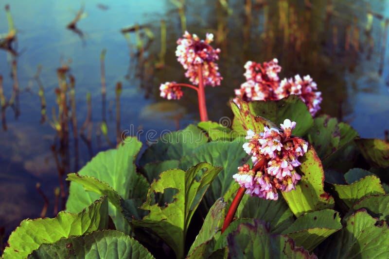 свет иллюстрации пущи цветков предпосылки красивейший стоковые фото