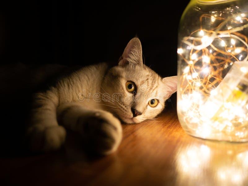 Свет кошки и светильники в стеклянной банке стоковое фото