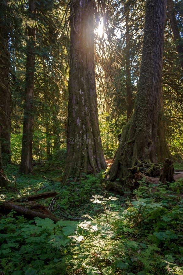 Свет леса стоковое изображение rf