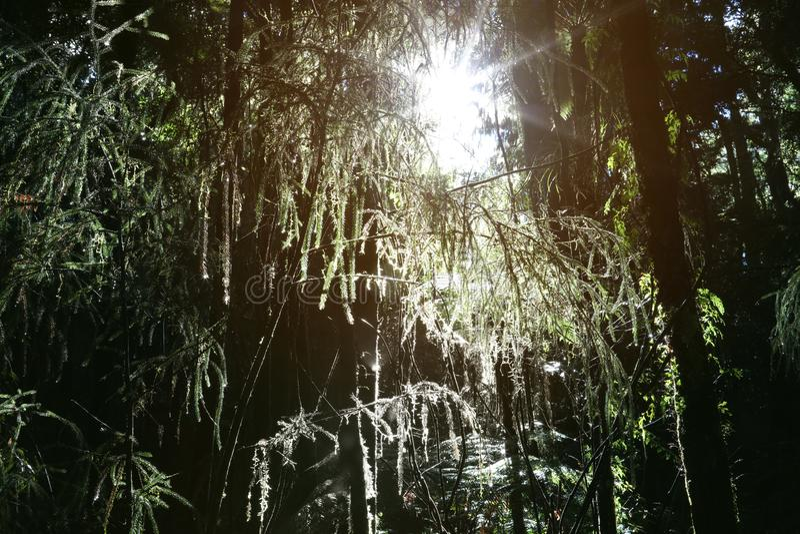 Свет леса стоковое фото rf