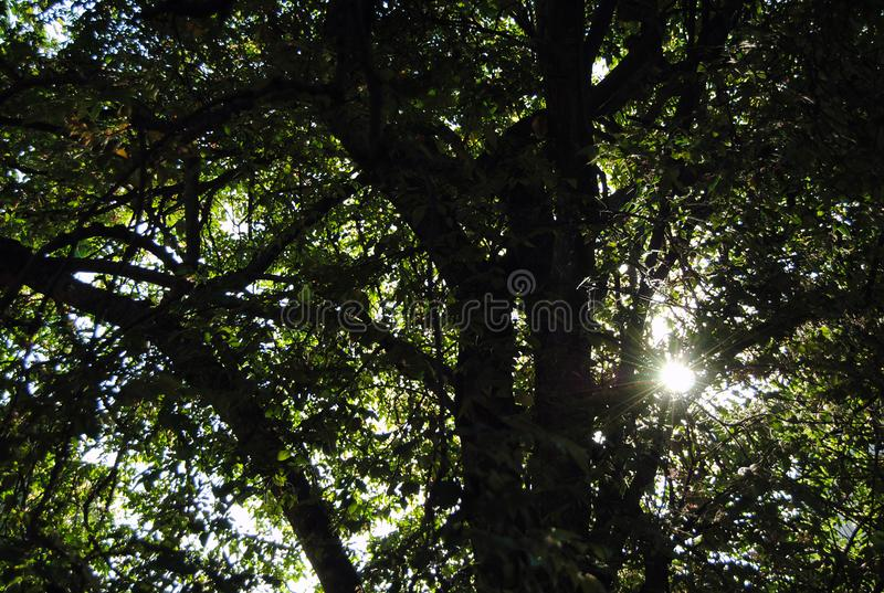 Свет, листья и деревья стоковые фотографии rf