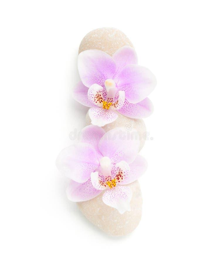 2 светлое - розовые орхидеи и камни изолированные на белой предпосылке Осмотрено от выше стоковая фотография rf