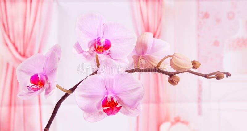 Светло-фиолетовая орхидея стоковые изображения rf