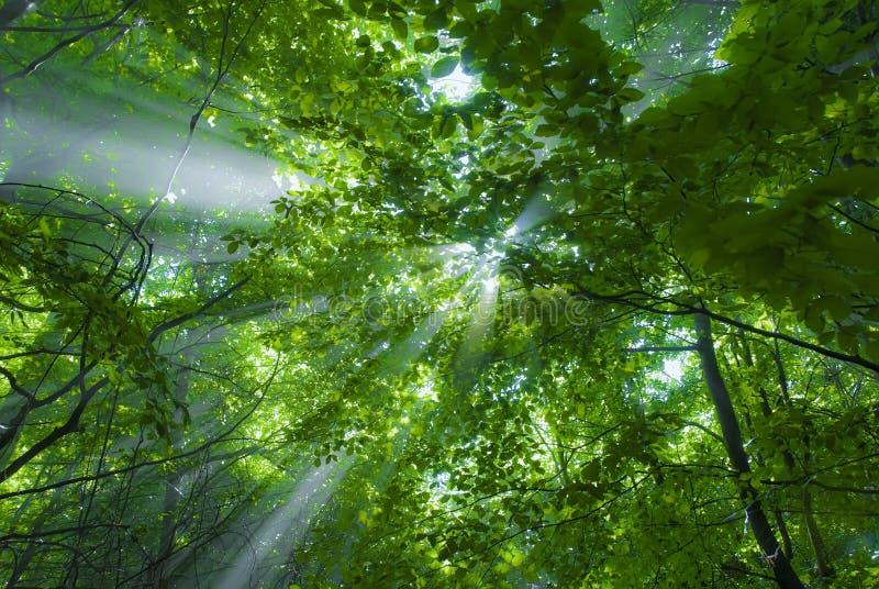 свет пущи стоковое фото rf