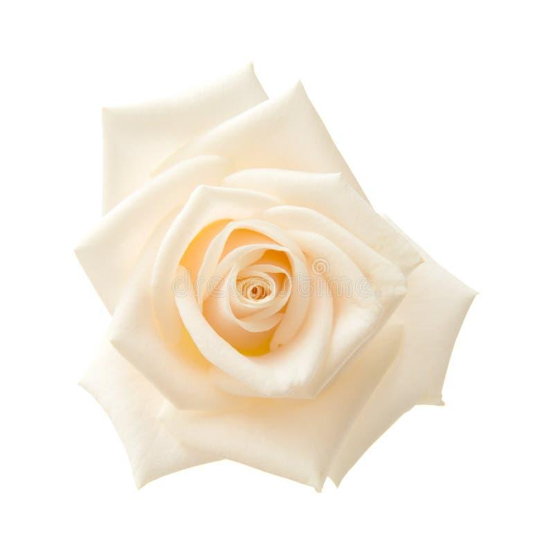 Свет - роза пинка и желтого цвета стоковые фото