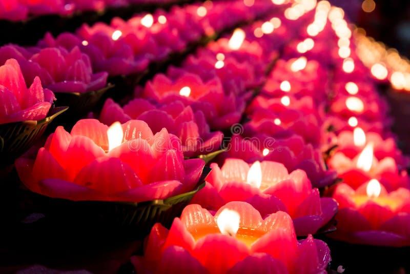 Свет свечи лотоса освещает окружать темноты стоковые изображения rf