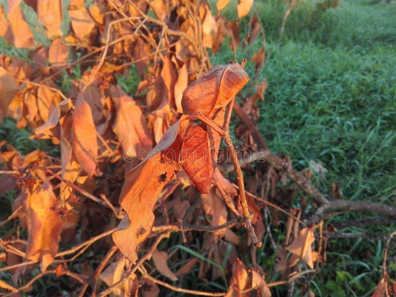 Свет солнца утра данный допинг к высушенному дереву оно сделало красивый стоковое изображение