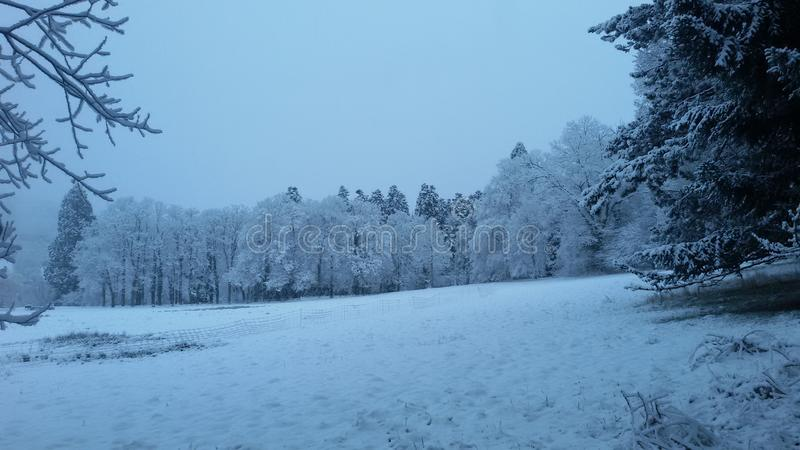 Свет страны чудес зимы голубой на снеге в луге окруженном деревьями стоковая фотография rf