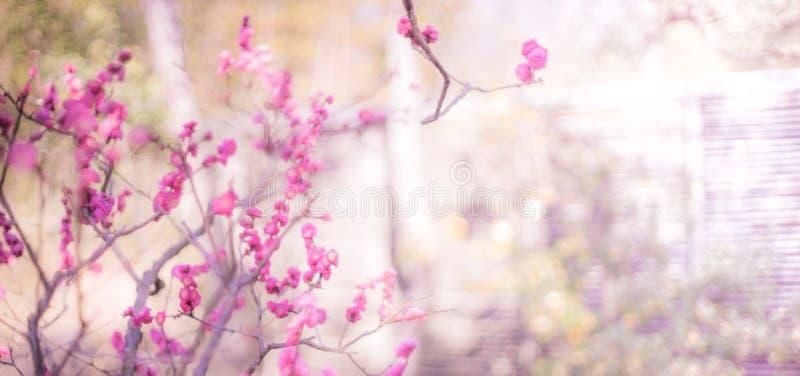 Свет тона цветения сливы винтажный стоковое изображение