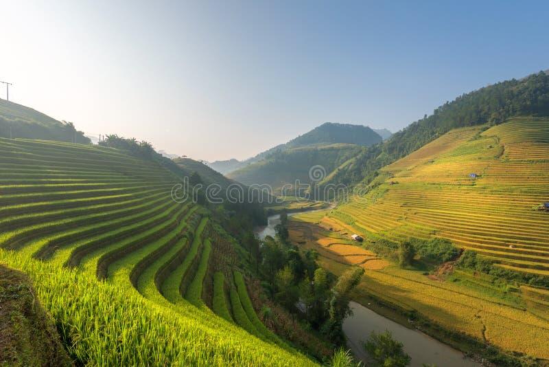 Свет утра от риса на террасе на ландшафте Вьетнама стоковое изображение rf