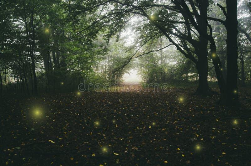 Светлые феи в заколдованных древесинах стоковое фото rf