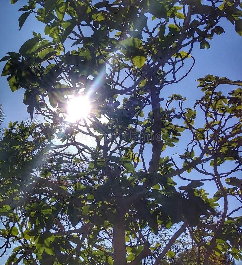Свет яркого солнца стоковые изображения rf